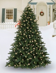 allegheny-outdoor-tree