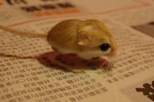smallest-animals9