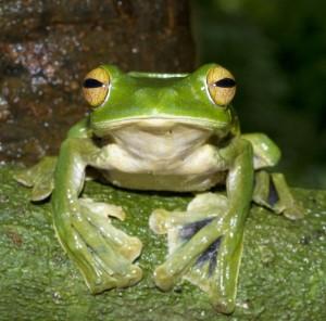 weird-hands-helens-flying-frog-5-600x592